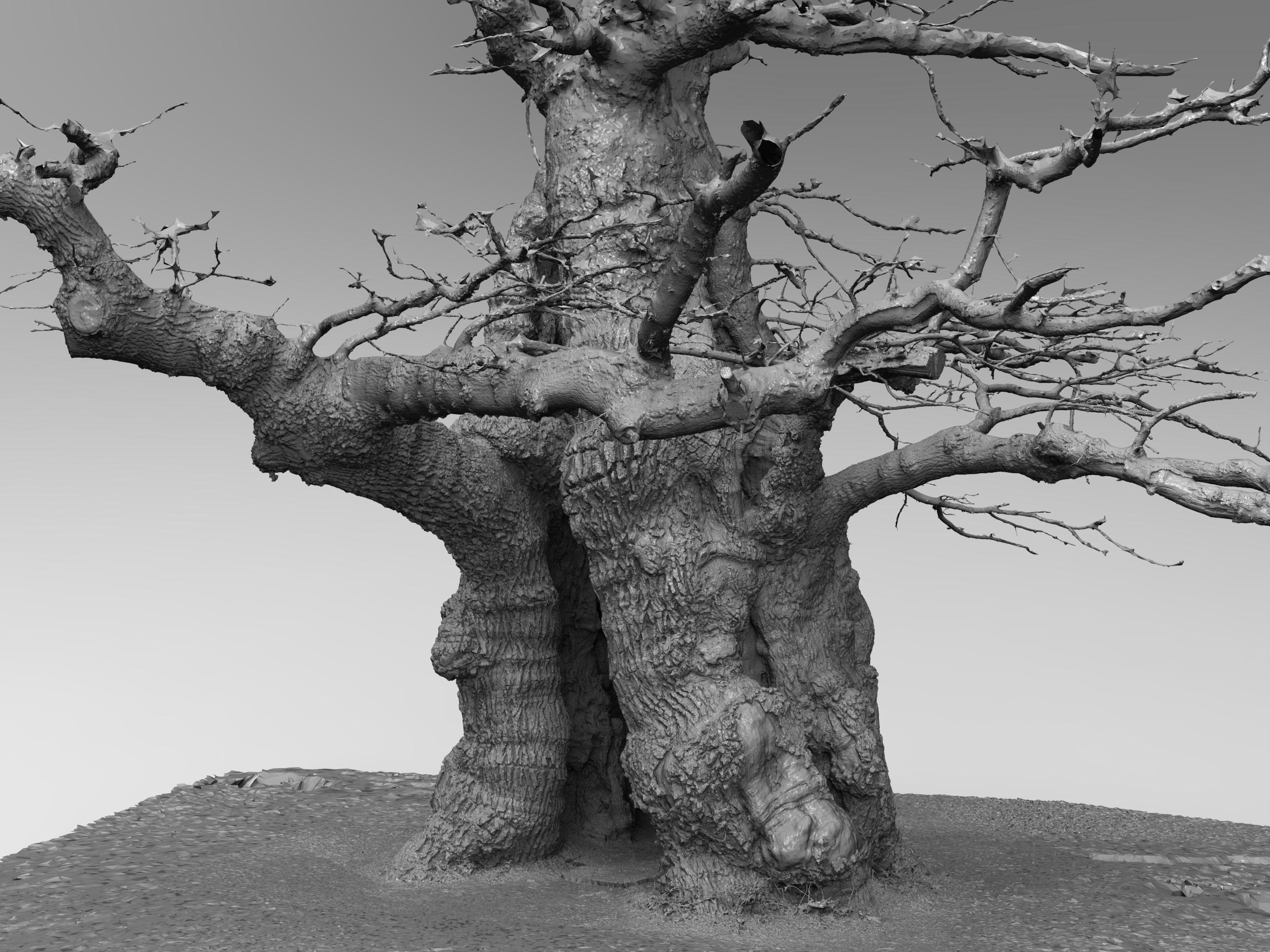 Skovfogedegen oak tree - Download Free 3D model by Rigsters