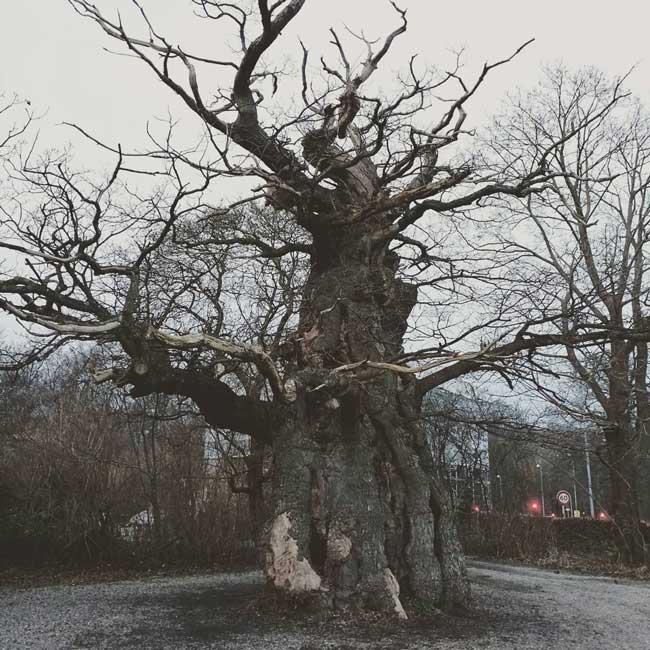 Rigsters Skovfogedegen-3d-scan