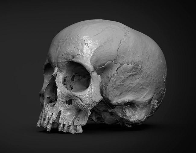 Rigsters hammerhus-skull-3d-scan-2
