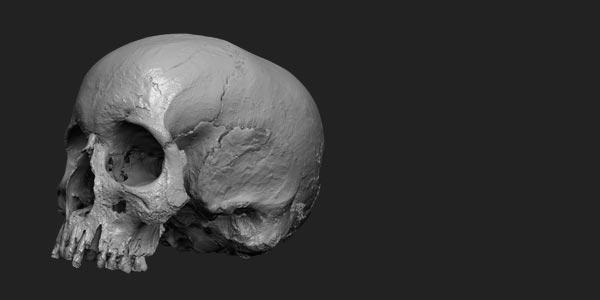 Rigsters hammerhus-skull-3d-scan